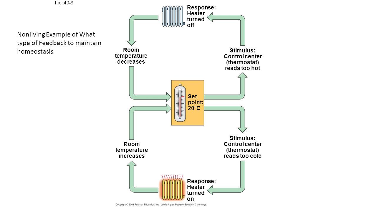 Fig. 40-8 Response: Heater turned off Stimulus: Control center (thermostat) reads too hot Room temperature decreases Set point: 20ºC Room temperature
