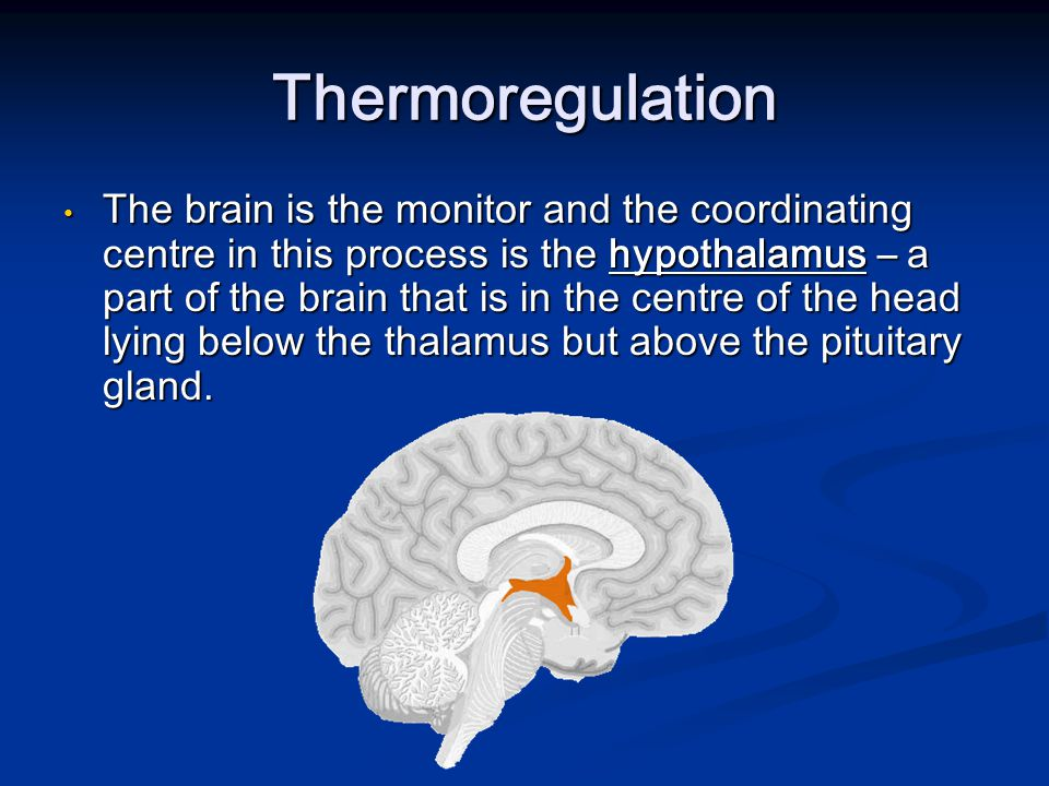 Thermoregulation The brain is the monitor and the coordinating centre in this process is the hypothalamus – a part of the brain that is in the centre