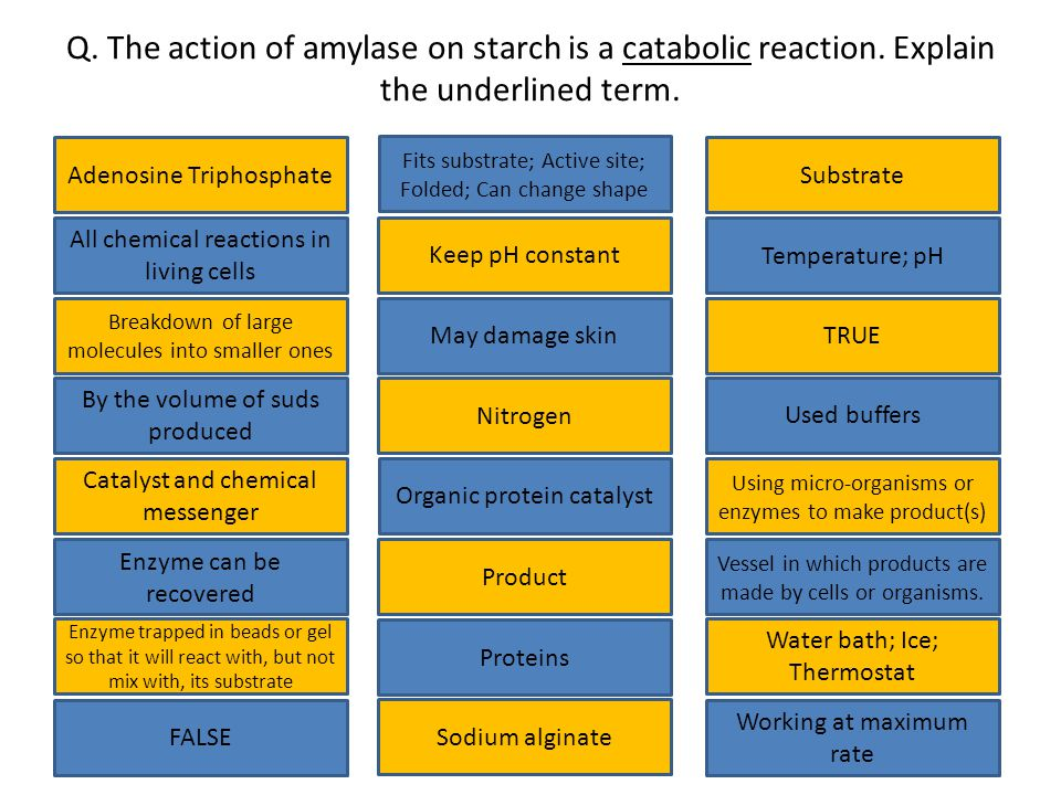 Q.The action of amylase on starch is a catabolic reaction.