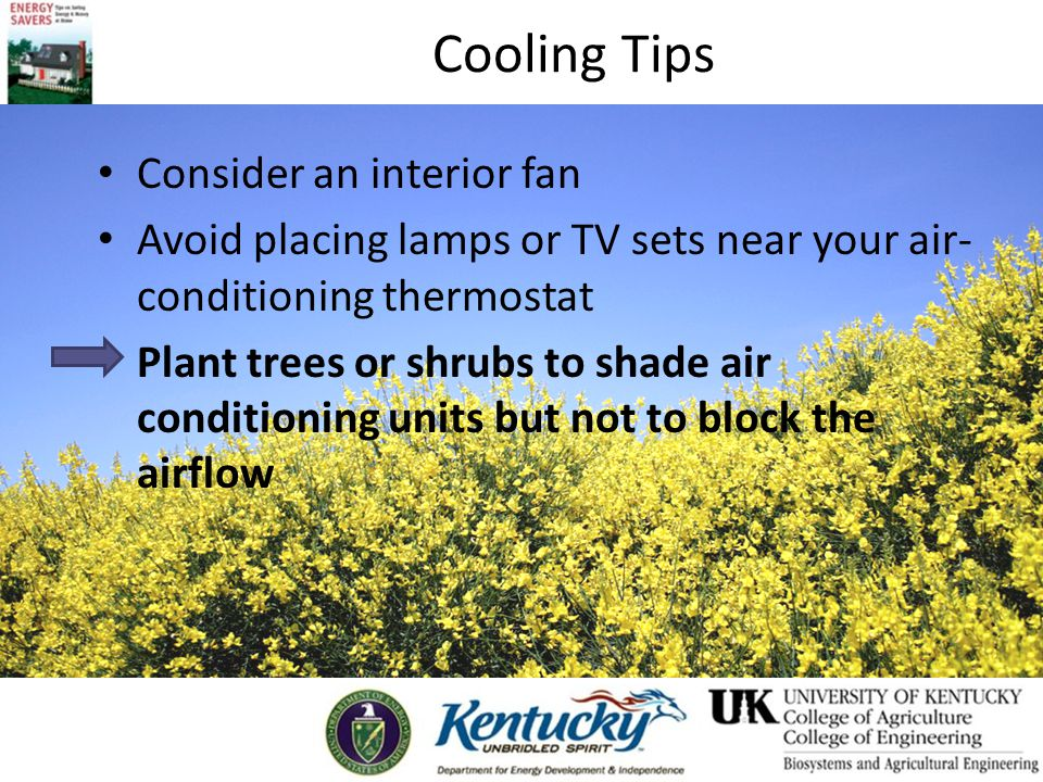 Cooling Tips Consider an interior fan Avoid placing lamps or TV sets near your air- conditioning thermostat Plant trees or shrubs to shade air conditioning units but not to block the airflow