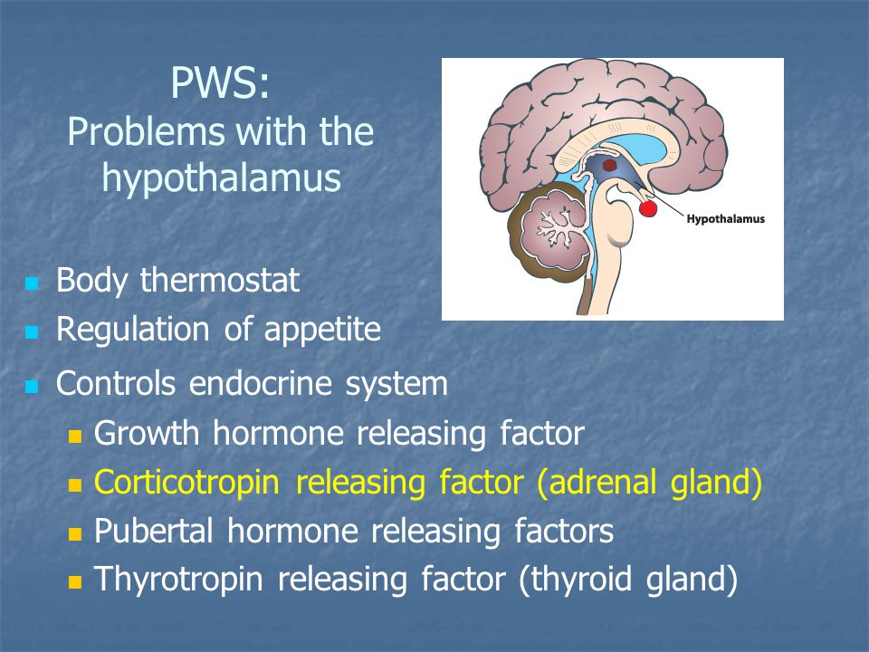 PWS: Problems with the hypothalamus Body thermostat Regulation of appetite Controls endocrine system Growth hormone releasing factor Corticotropin releasing factor (adrenal gland) Pubertal hormone releasing factors Thyrotropin releasing factor (thyroid gland)