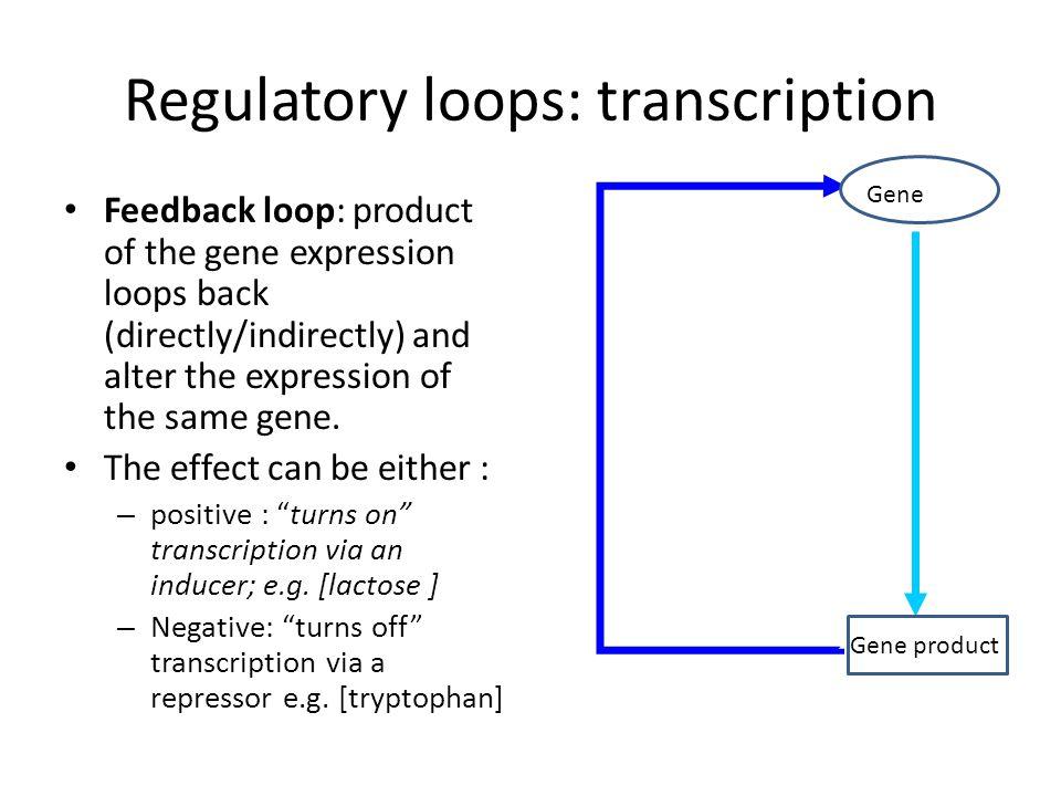 Regulatory loops: transcription Feedback loop: product of the gene expression loops back (directly/indirectly) and alter the expression of the same gene.