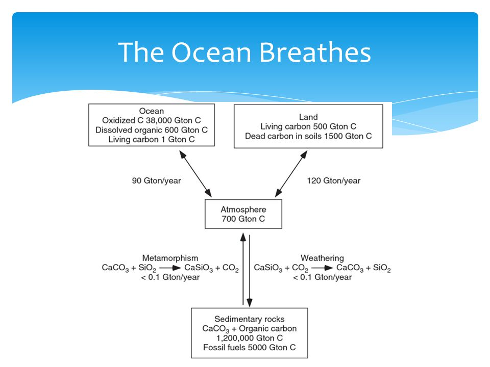 The Ocean Breathes