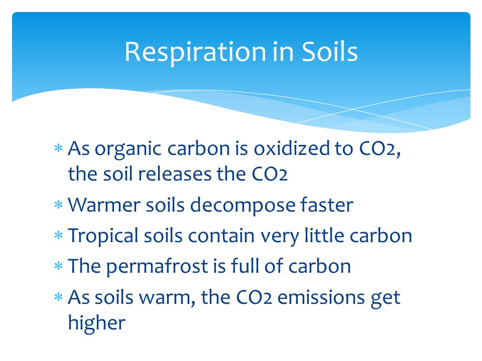  As organic carbon is oxidized to CO2, the soil releases the CO2  Warmer soils decompose faster  Tropical soils contain very little carbon  The permafrost is full of carbon  As soils warm, the CO2 emissions get higher Respiration in Soils