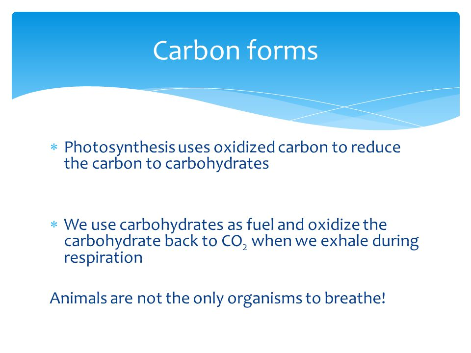  Photosynthesis uses oxidized carbon to reduce the carbon to carbohydrates  We use carbohydrates as fuel and oxidize the carbohydrate back to CO 2 when we exhale during respiration Animals are not the only organisms to breathe.