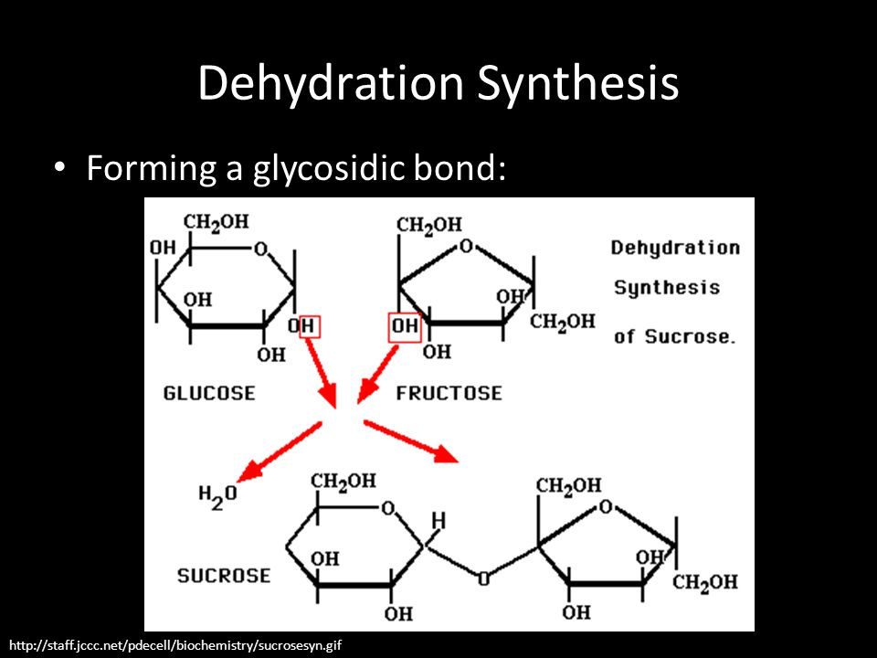 Dehydration Synthesis http://staff.jccc.net/pdecell/biochemistry/sucrosesyn.gif Forming a glycosidic bond: