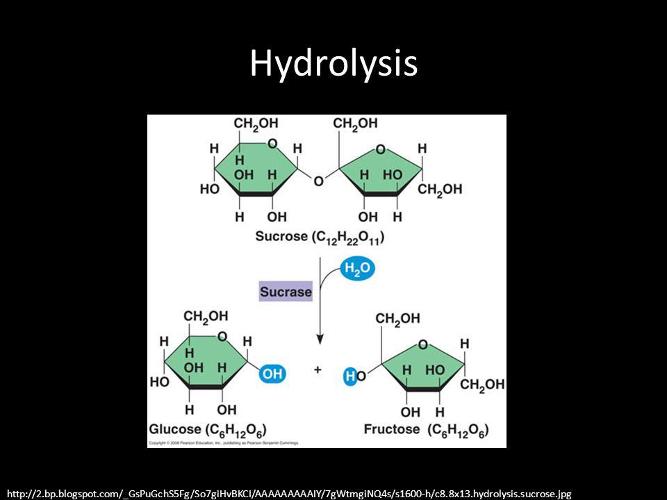 Hydrolysis http://2.bp.blogspot.com/_GsPuGchS5Fg/So7giHvBKCI/AAAAAAAAAIY/7gWtmgiNQ4s/s1600-h/c8.8x13.hydrolysis.sucrose.jpg