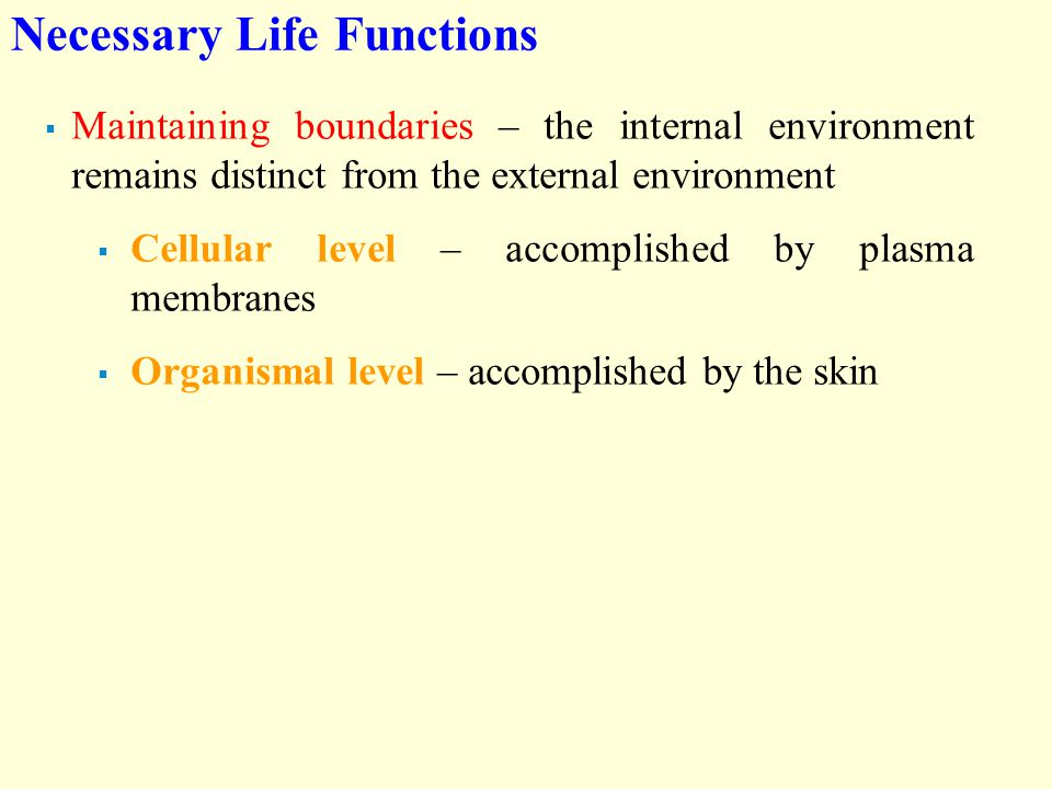 Necessary Life Functions  Maintaining boundaries – the internal environment remains distinct from the external environment  Cellular level – accomplished by plasma membranes  Organismal level – accomplished by the skin