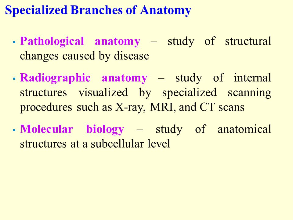 Specialized Branches of Anatomy  Pathological anatomy – study of structural changes caused by disease  Radiographic anatomy – study of internal structures visualized by specialized scanning procedures such as X-ray, MRI, and CT scans  Molecular biology – study of anatomical structures at a subcellular level