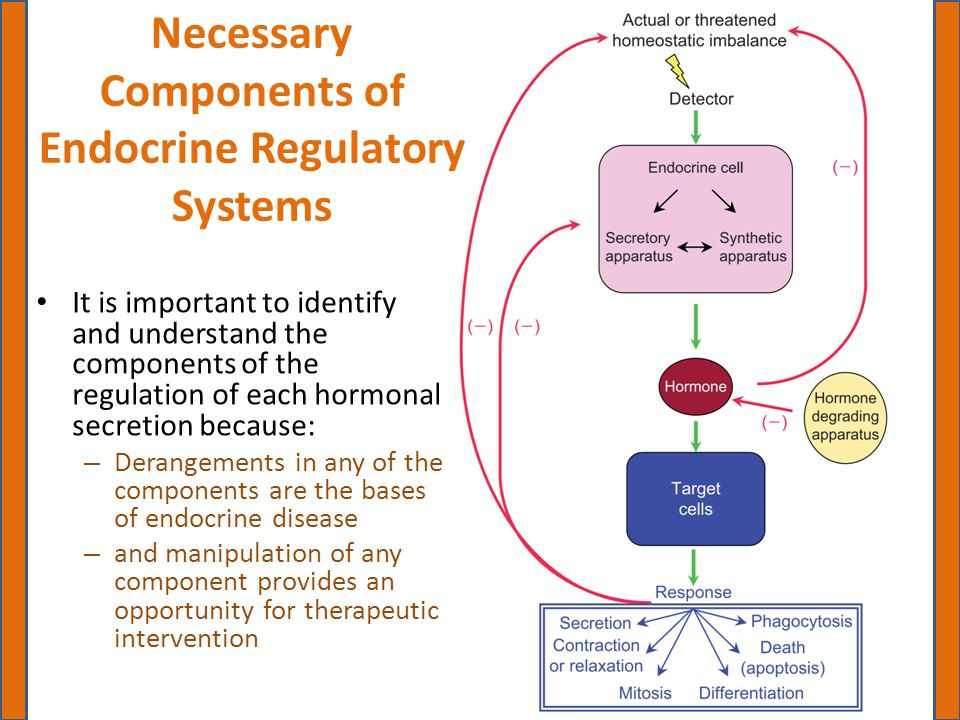 Necessary Components of Endocrine Regulatory Systems It is important to identify and understand the components of the regulation of each hormonal secr