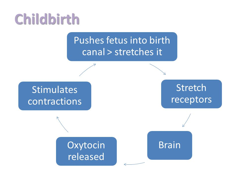 Childbirth Pushes fetus into birth canal > stretches it Stretch receptors Brain Oxytocin released Stimulates contractions