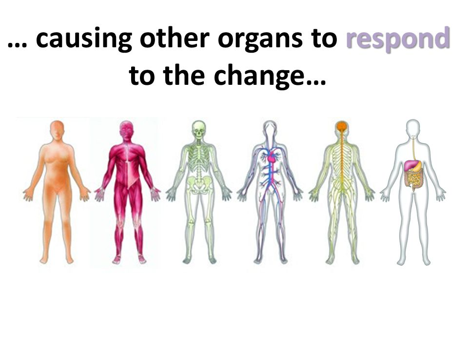 respond … causing other organs to respond to the change…