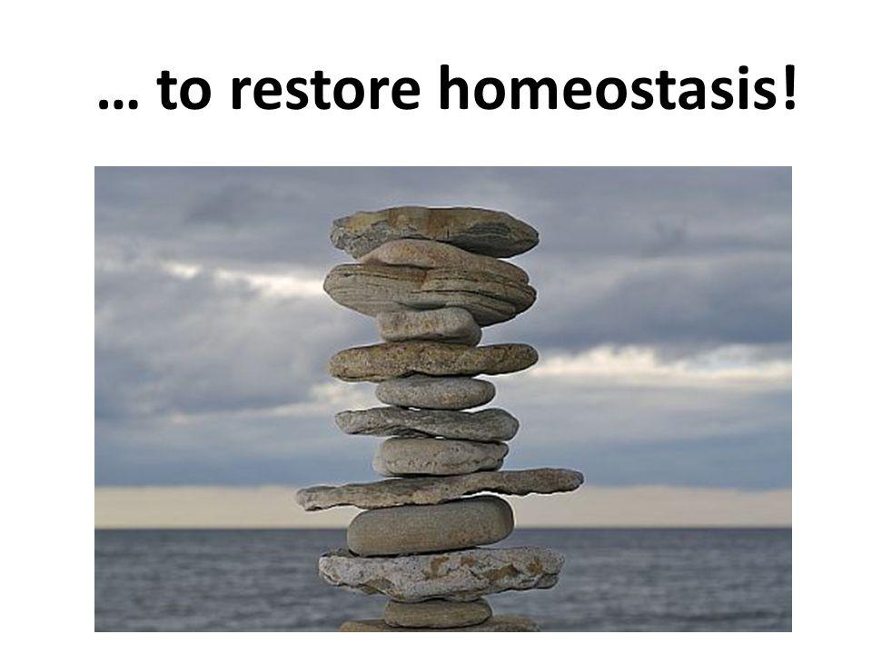 … to restore homeostasis!