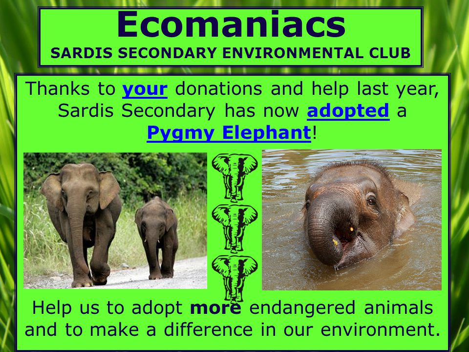 Ecomaniacs SARDIS SECONDARY ENVIRONMENTAL CLUB Thanks to your donations and help last year, Sardis Secondary has now adopted a Pygmy Elephant.