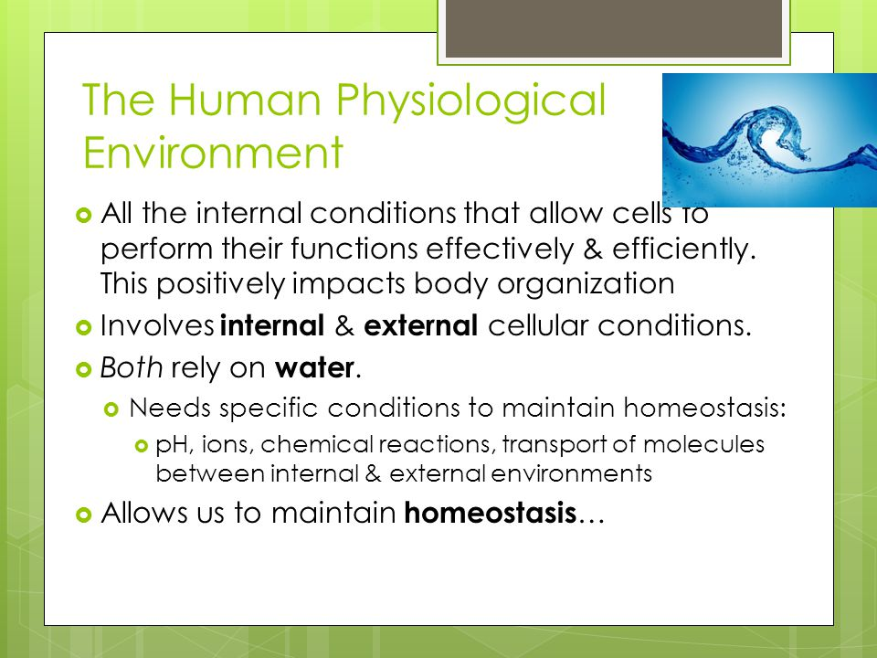 The Human Physiological Environment  All the internal conditions that allow cells to perform their functions effectively & efficiently. This positive
