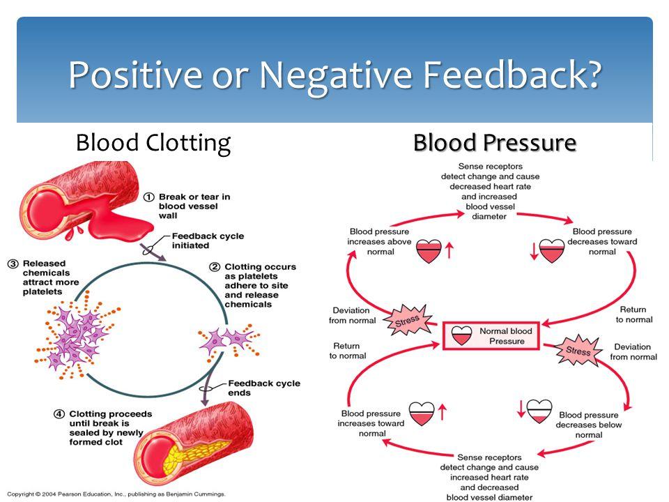 Positive or Negative Feedback? Blood Clotting Blood Pressure Blood Pressure
