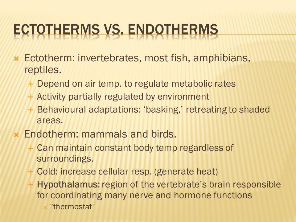  Ectotherm: invertebrates, most fish, amphibians, reptiles.