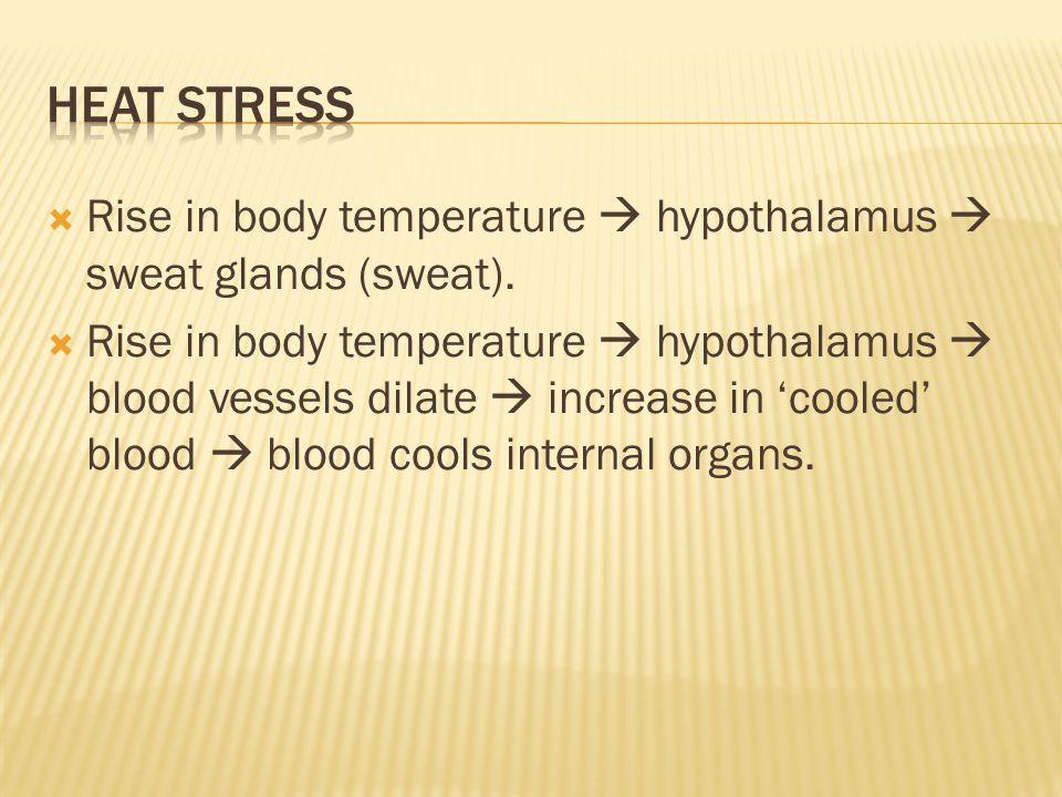  Rise in body temperature  hypothalamus  sweat glands (sweat).