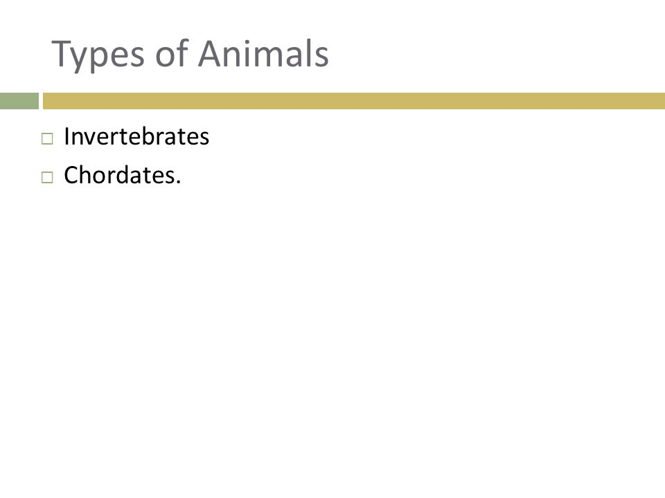 Types of Animals  Invertebrates  Chordates.