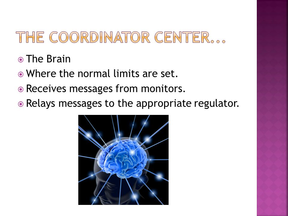  The Brain  Where the normal limits are set.  Receives messages from monitors.