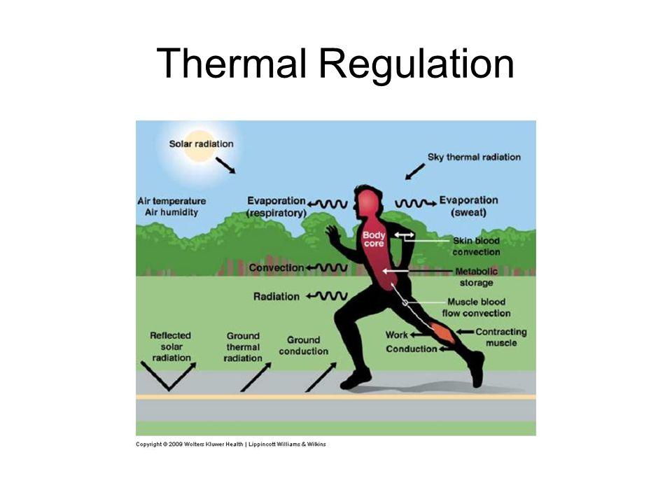 Thermal Regulation