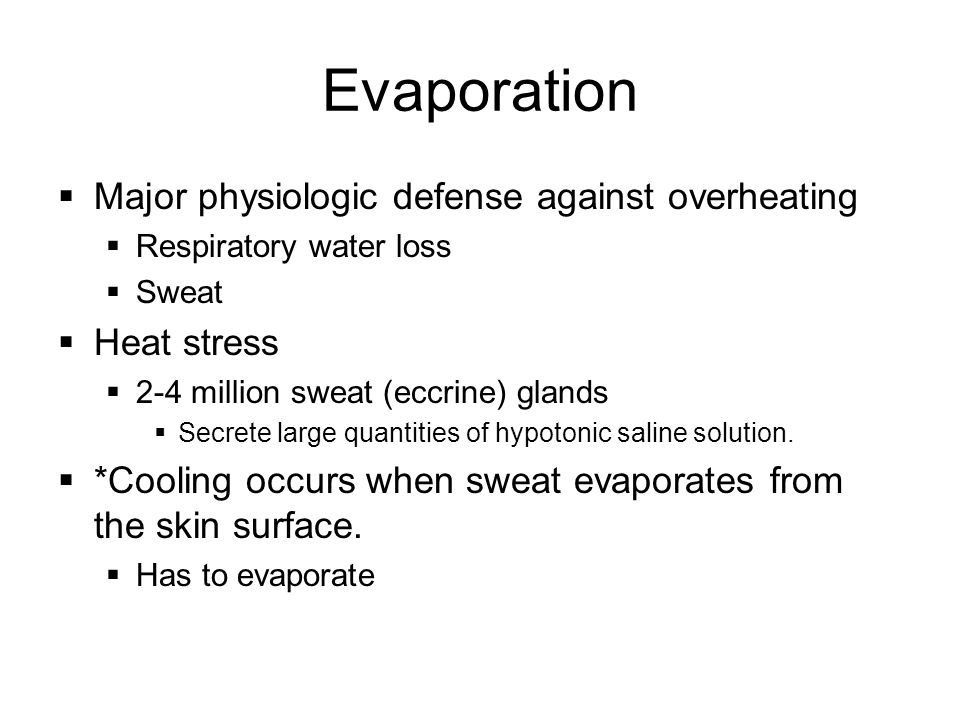 Evaporation  Major physiologic defense against overheating  Respiratory water loss  Sweat  Heat stress  2-4 million sweat (eccrine) glands  Secrete large quantities of hypotonic saline solution.