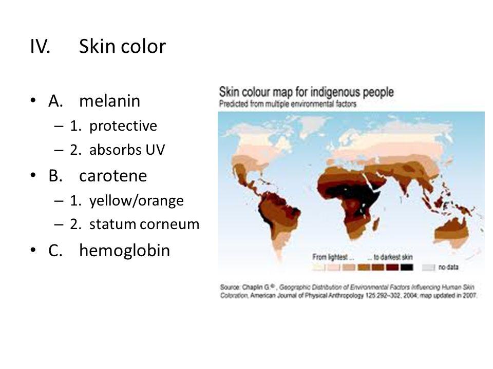 D. Homeostatic imbalance 1. erythema 2. blanching 3. jaundice 4. hematomas 5. melanoma