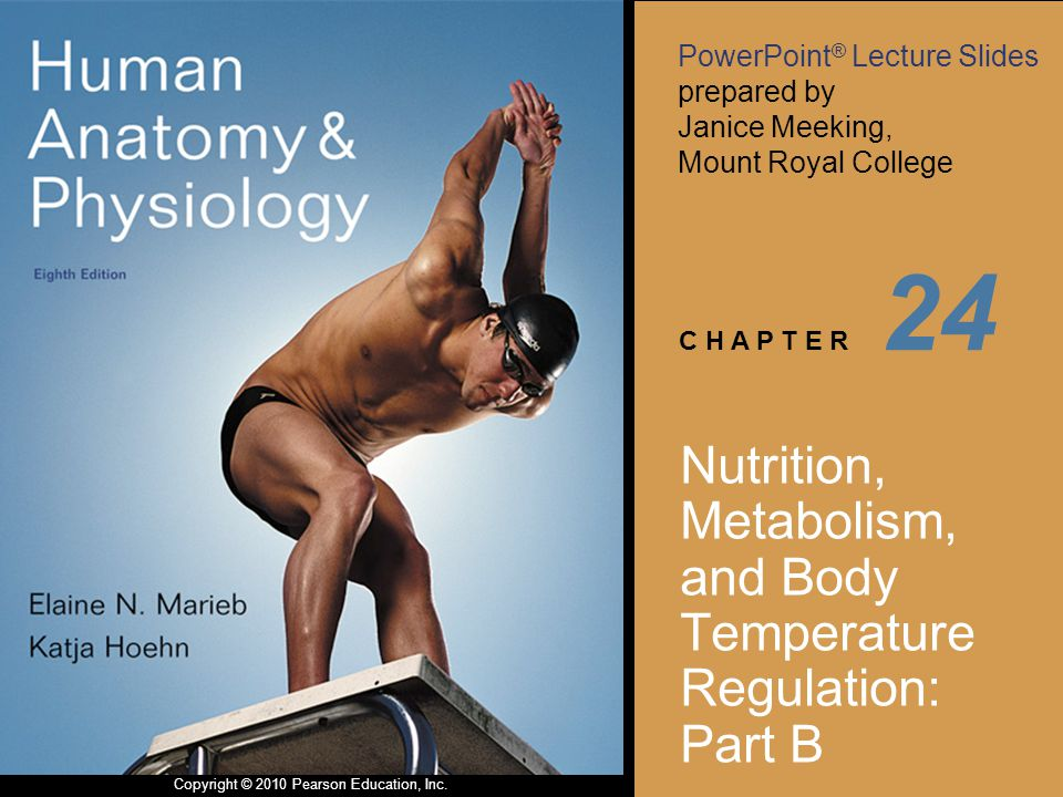 PowerPoint ® Lecture Slides prepared by Janice Meeking, Mount Royal College C H A P T E R Copyright © 2010 Pearson Education, Inc. 24 Nutrition, Metab
