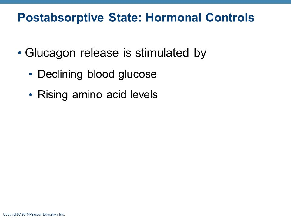 Copyright © 2010 Pearson Education, Inc. Postabsorptive State: Hormonal Controls Glucagon release is stimulated by Declining blood glucose Rising amin