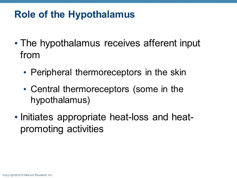 Copyright © 2010 Pearson Education, Inc. Role of the Hypothalamus The hypothalamus receives afferent input from Peripheral thermoreceptors in the skin