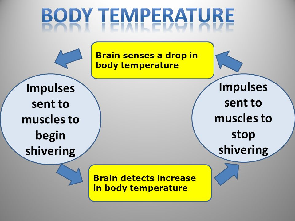 Brain senses a drop in body temperature Brain detects increase in body temperature Impulses sent to muscles to begin shivering Impulses sent to muscles to stop shivering 46