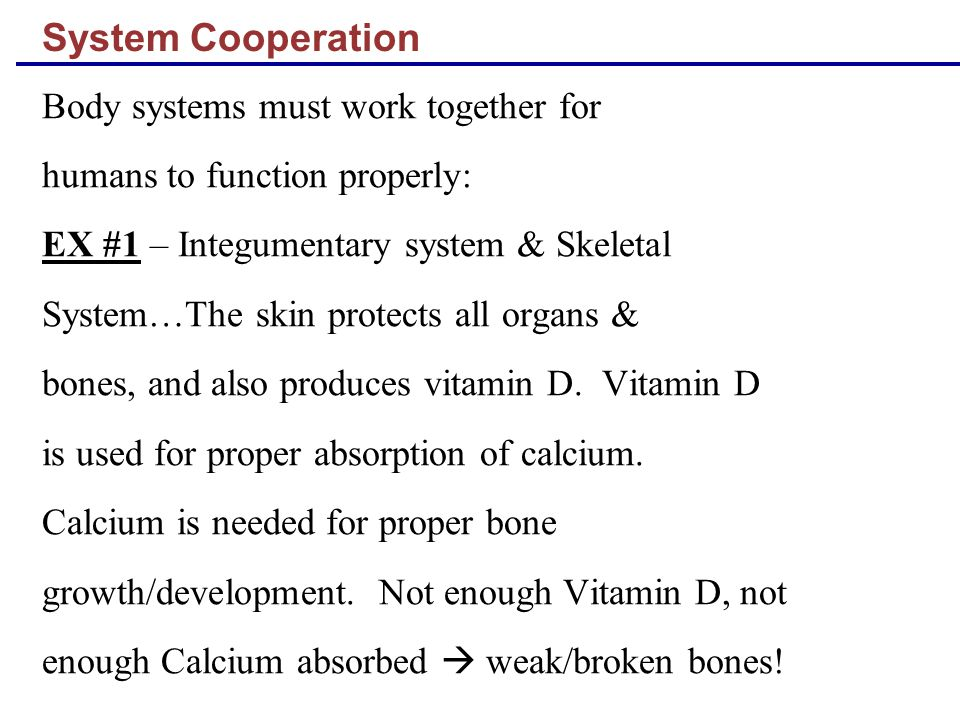 System Cooperation Body systems must work together for humans to function properly: EX #1 – Integumentary system & Skeletal System…The skin protects a