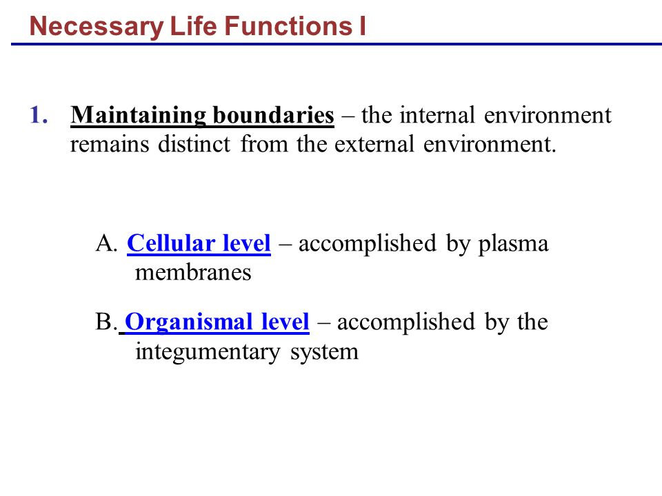 Necessary Life Functions I 1.Maintaining boundaries – the internal environment remains distinct from the external environment. A. Cellular level – acc