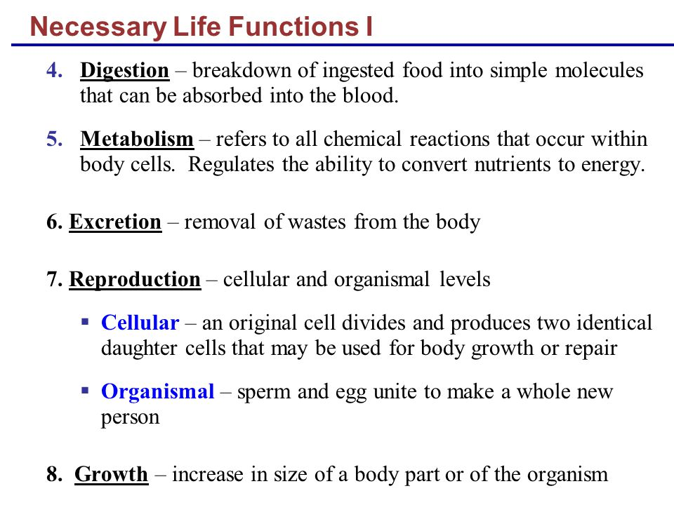 Necessary Life Functions I 4.Digestion – breakdown of ingested food into simple molecules that can be absorbed into the blood. 5.Metabolism – refers t