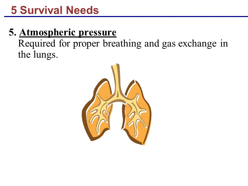 5 Survival Needs 5. Atmospheric pressure Required for proper breathing and gas exchange in the lungs.