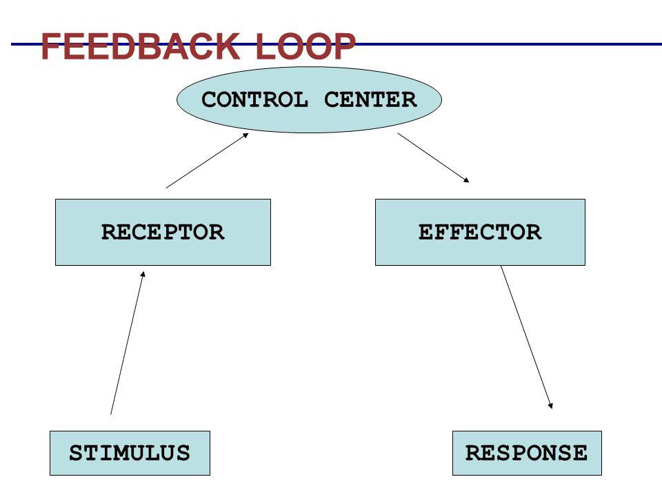 STIMULUSRESPONSE CONTROL CENTER RECEPTOREFFECTOR FEEDBACK LOOP