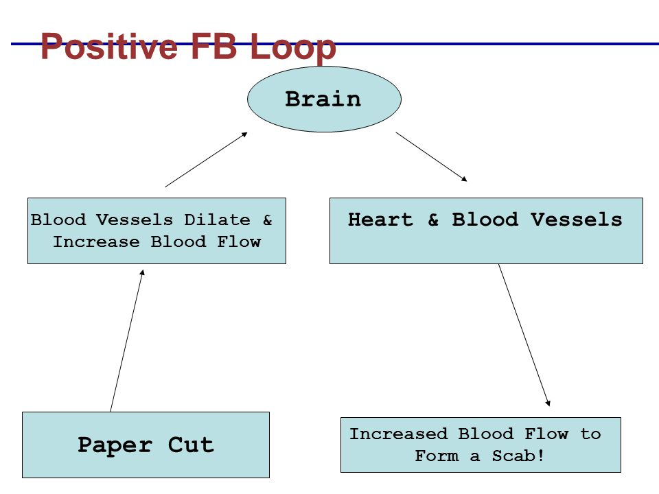 Positive FB Loop Paper Cut Increased Blood Flow to Form a Scab! Brain Blood Vessels Dilate & Increase Blood Flow Heart & Blood Vessels
