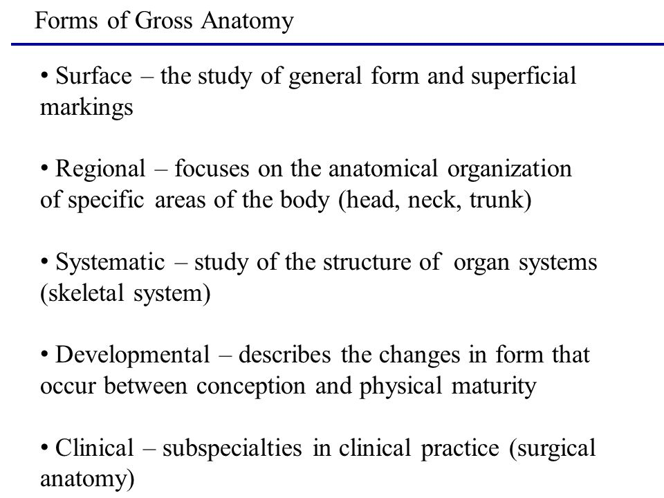 Forms of Gross Anatomy Surface – the study of general form and superficial markings Regional – focuses on the anatomical organization of specific area