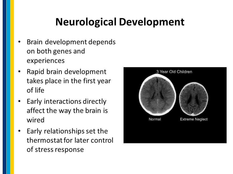 Neurological Development Brain development depends on both genes and experiences Rapid brain development takes place in the first year of life Early interactions directly affect the way the brain is wired Early relationships set the thermostat for later control of stress response