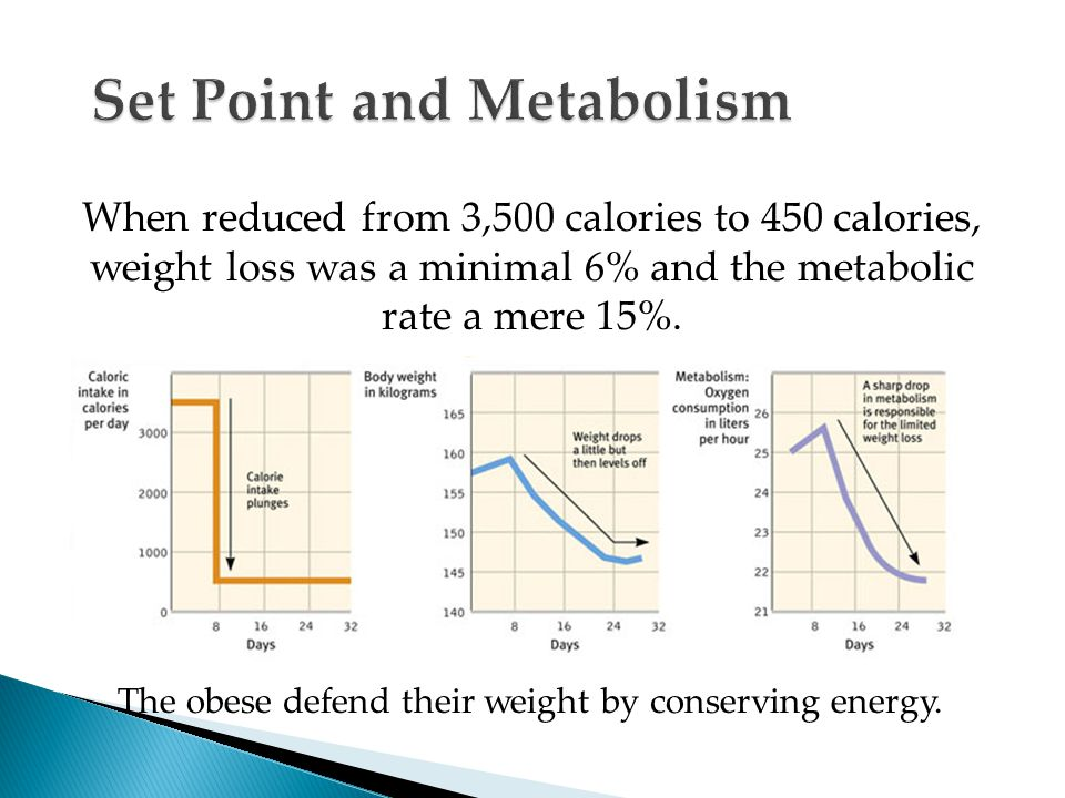 When reduced from 3,500 calories to 450 calories, weight loss was a minimal 6% and the metabolic rate a mere 15%.