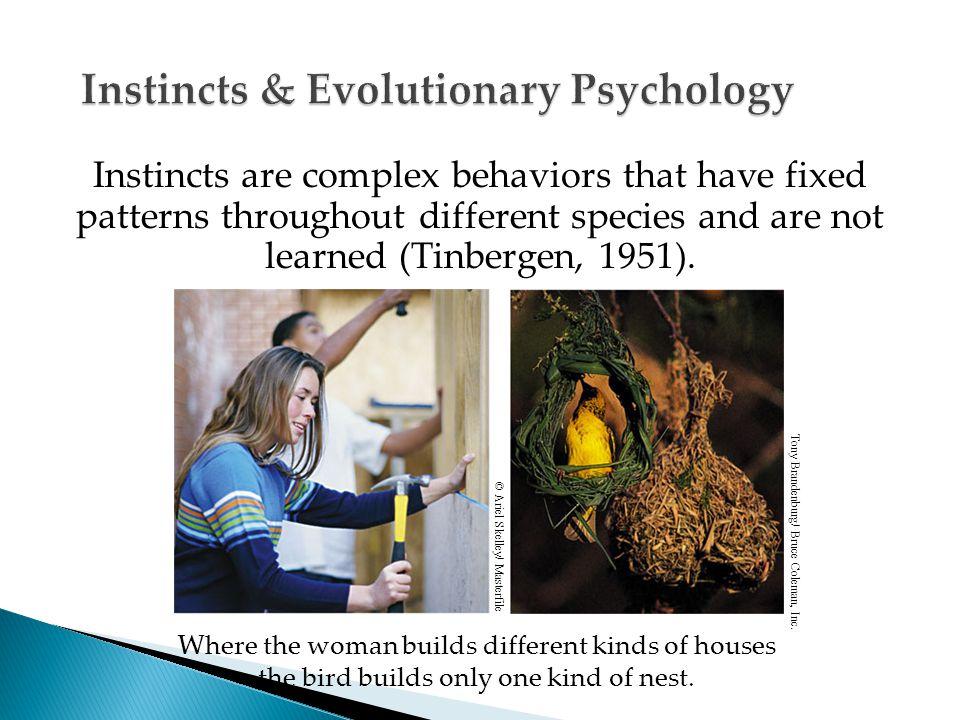 Instincts are complex behaviors that have fixed patterns throughout different species and are not learned (Tinbergen, 1951).