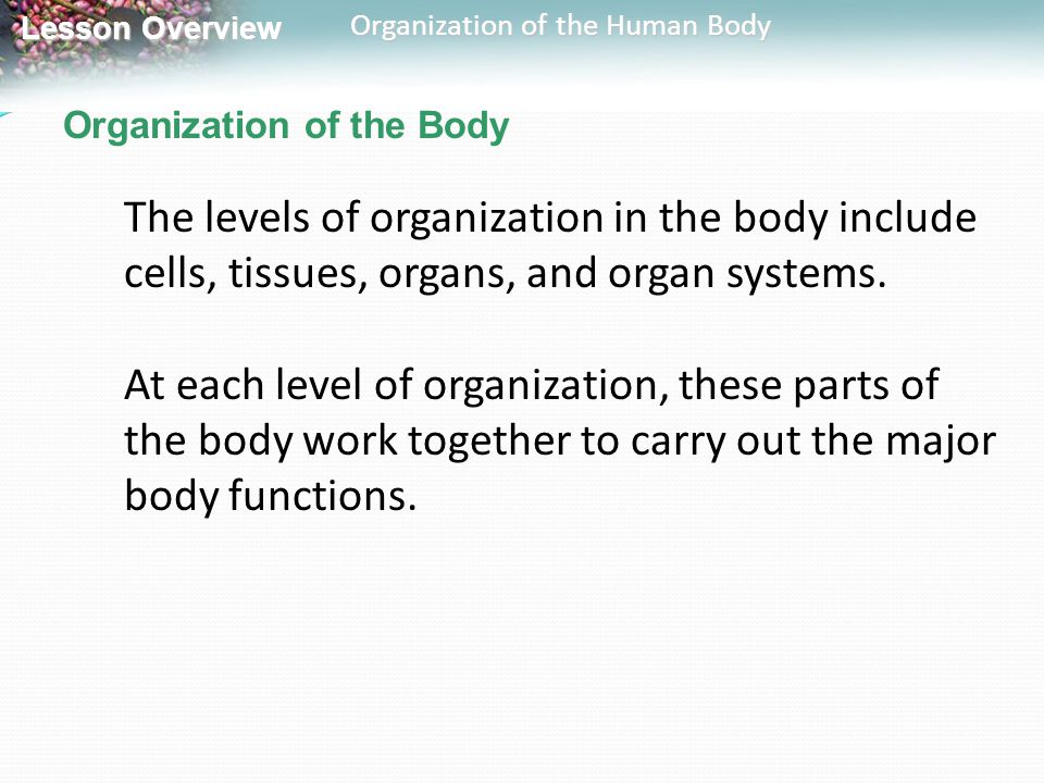 Lesson Overview Lesson Overview Organization of the Human Body Organization of the Body The levels of organization in the body include cells, tissues,
