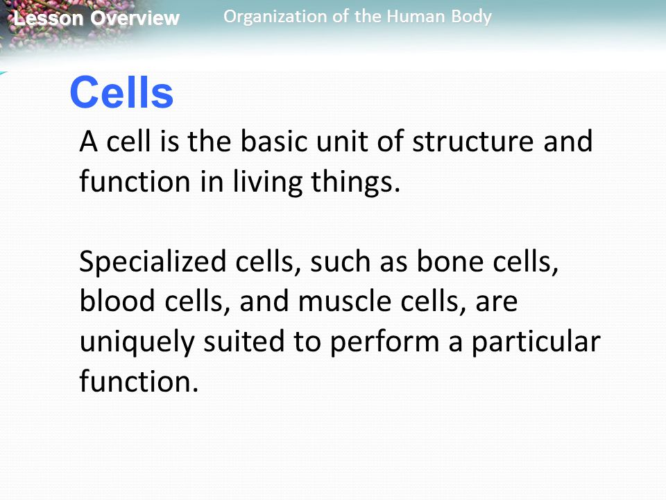 Lesson Overview Lesson Overview Organization of the Human Body Cells A cell is the basic unit of structure and function in living things. Specialized