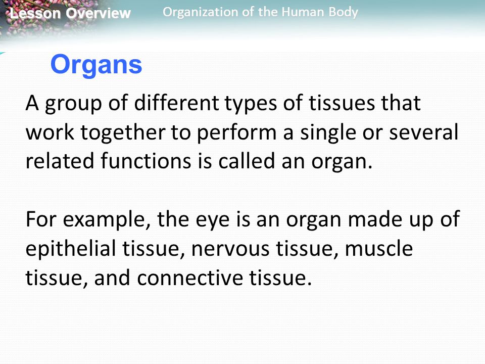 Lesson Overview Lesson Overview Organization of the Human Body Organs A group of different types of tissues that work together to perform a single or
