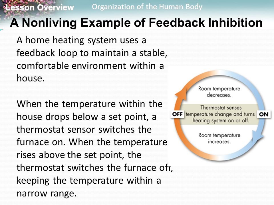 Lesson Overview Lesson Overview Organization of the Human Body A Nonliving Example of Feedback Inhibition A home heating system uses a feedback loop t