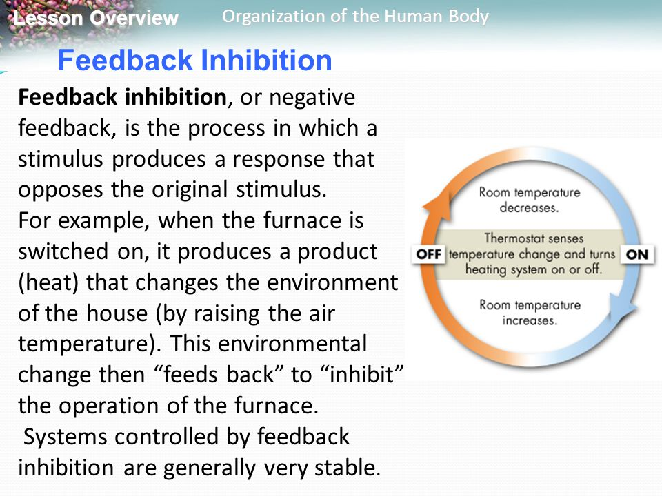 Lesson Overview Lesson Overview Organization of the Human Body Feedback Inhibition Feedback inhibition, or negative feedback, is the process in which
