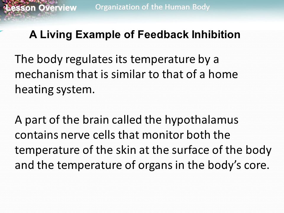 Lesson Overview Lesson Overview Organization of the Human Body A Living Example of Feedback Inhibition The body regulates its temperature by a mechani