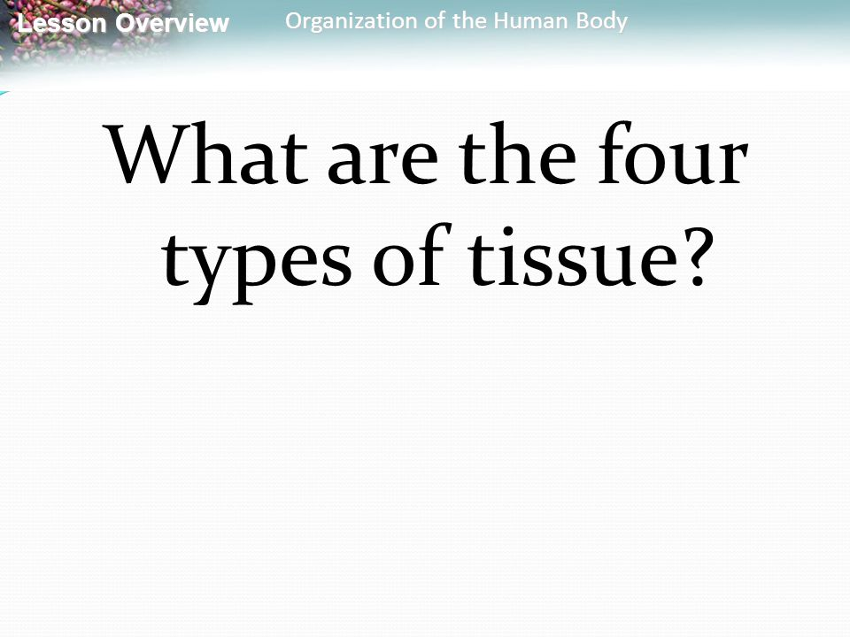 Lesson Overview Lesson Overview Organization of the Human Body What are the four types of tissue?