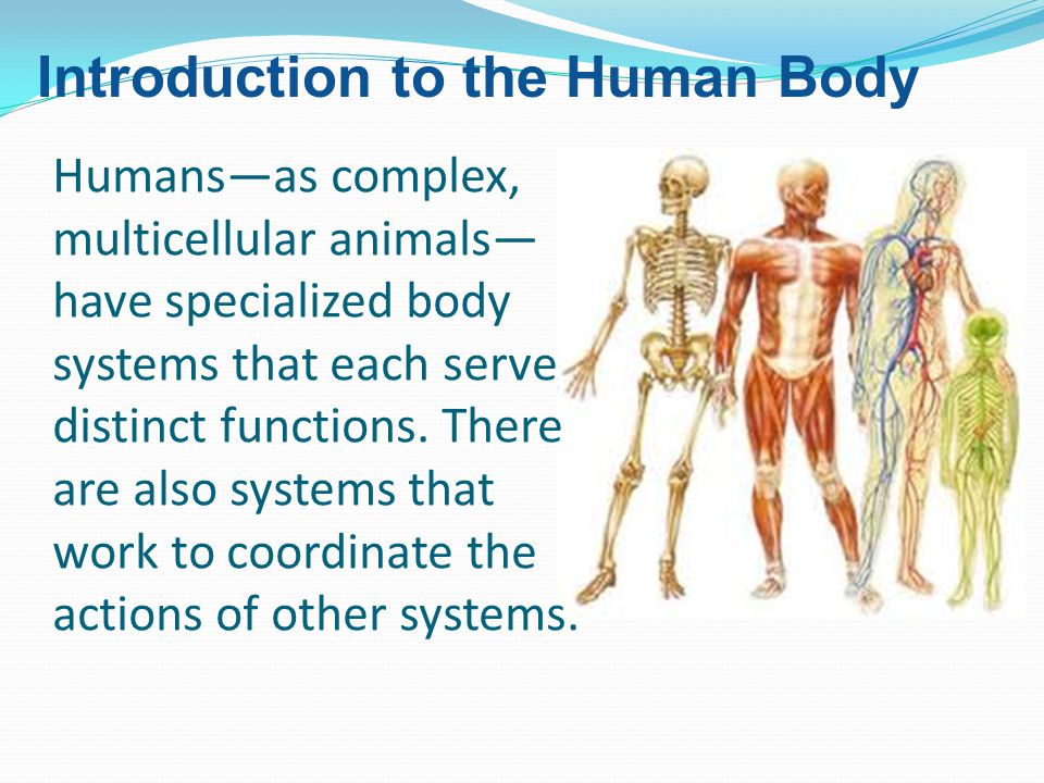 Humans—as complex, multicellular animals— have specialized body systems that each serve distinct functions. There are also systems that work to coordi