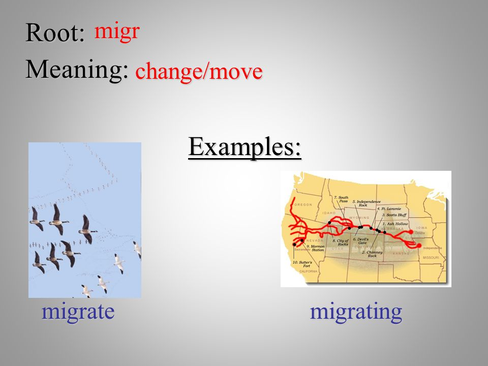 Root:migr Meaning: change/move Examples: migratemigrating